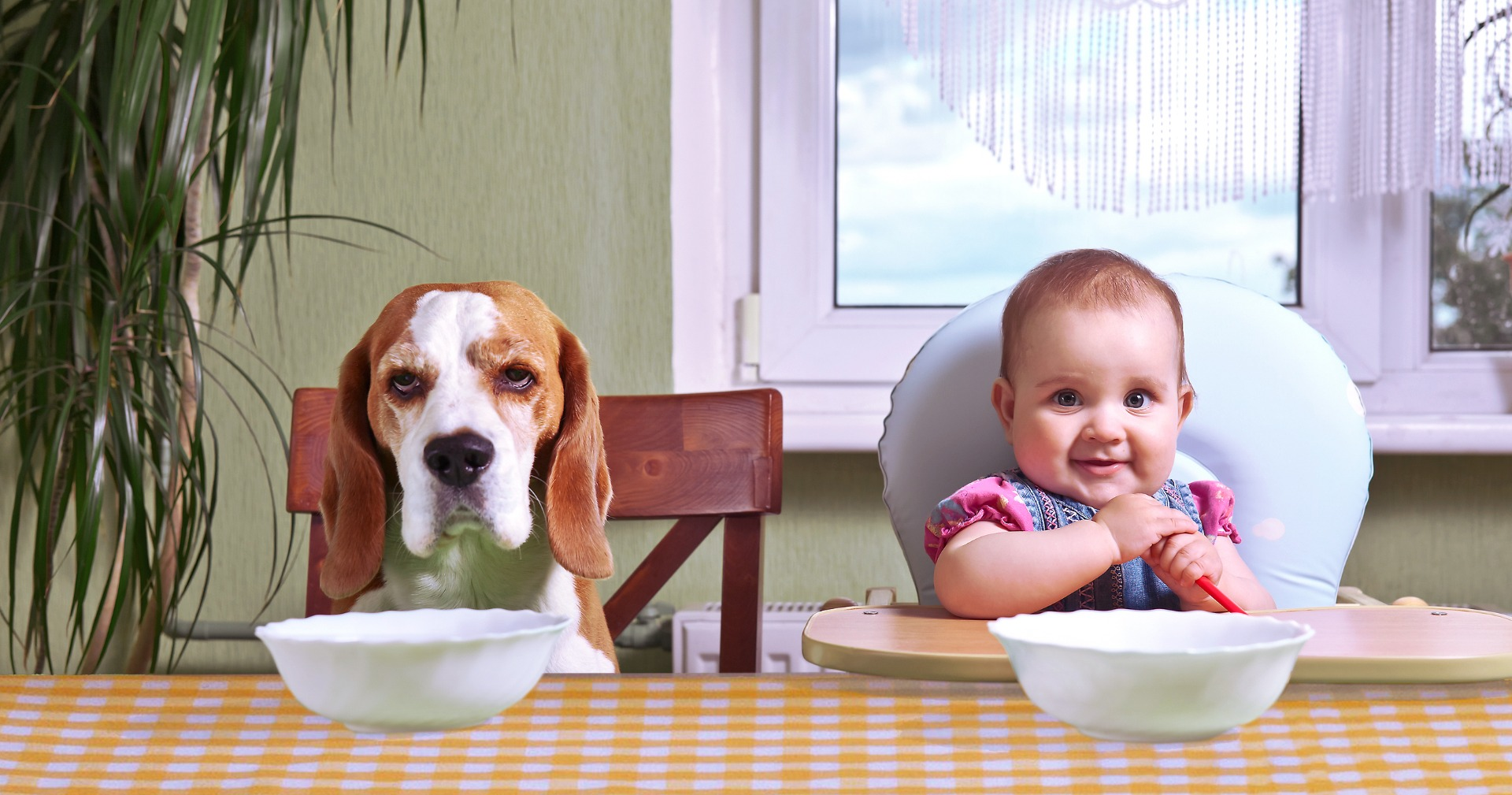 Test jezelf: wat is de ideale tafelbeschermer voor jou?